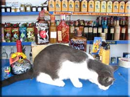 Local Rums and a rescued cat